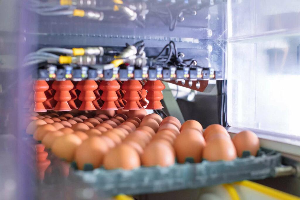 výroba vakcín - pěstování viru ve vejcích